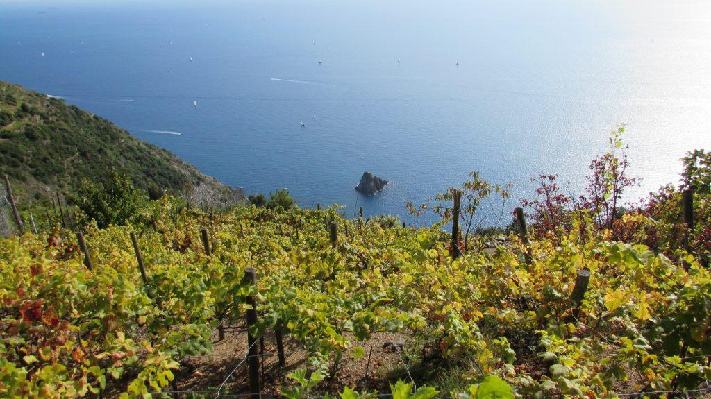 Cinque terre sciacchettrà, vino dolce ligure